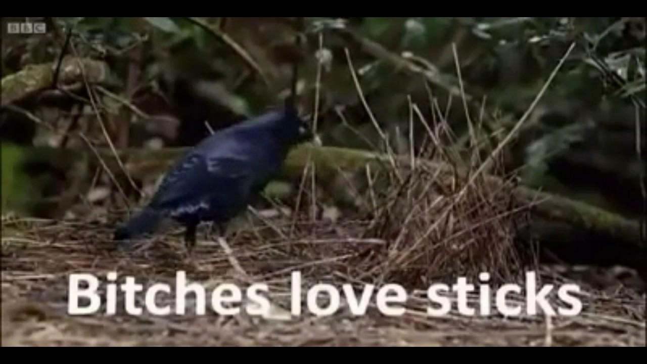 Lemme smash bird
