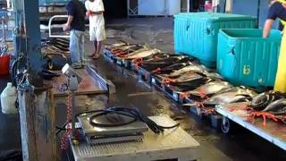 Big Tuna Fishing in Hilo, Hawaii