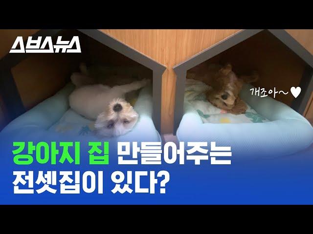 강아지 고양이를 위한 전셋집, 신혼부부를 위한 아파트? 내 삶에 맞춘 공동주택 ㄷㄷ/스브스뉴스