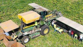New Zealand, North Island Farming Compilation   Pumpkin -  Squash - Kiwi's and Maize  [Dronly]