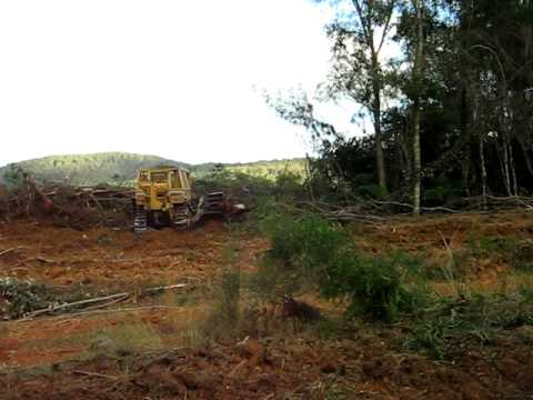 Clearing Plantations