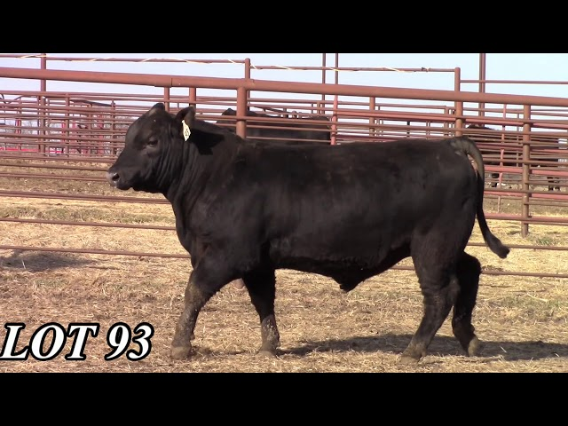 Mead Angus Farms Lot 93