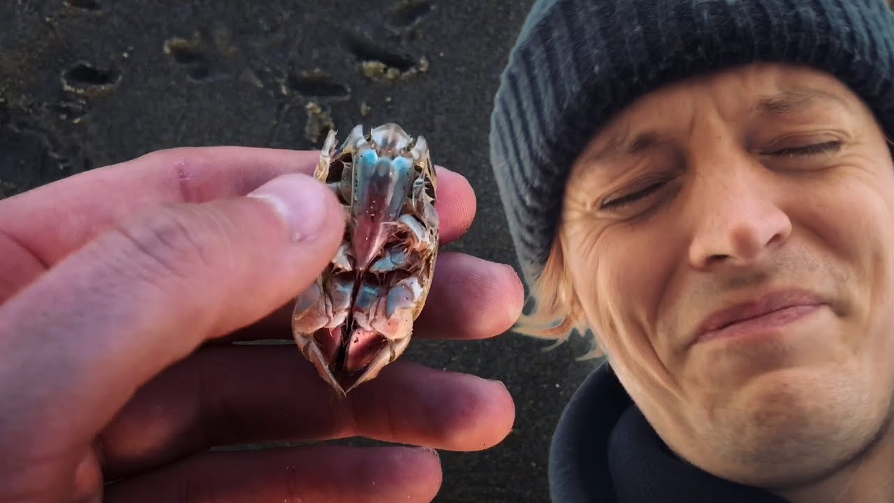 Cute Animal Almost Dies But We Rescue It!