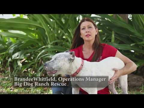 Those Who Care: Big Dog Ranch Rescue & Peggy Adams Animal Rescue League