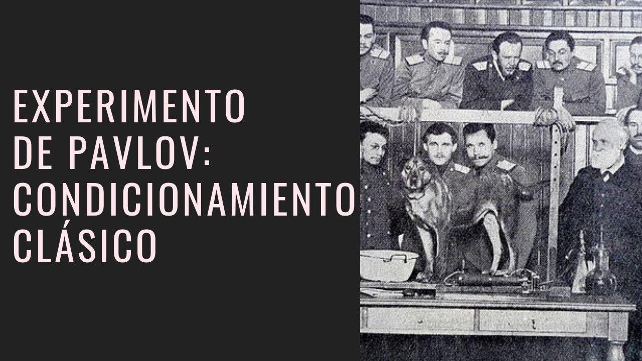 Experimento De Perros De Pavlov Condicionamiento Clásico