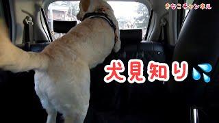 きなこは犬見知りです。犬にはカナリ消極的です。 しかしきなこは犬の事...