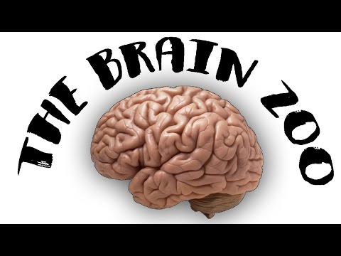 The Brain Zoo - Basics of Meditation
