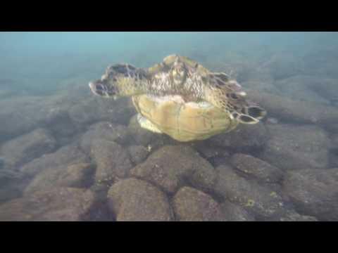 Hawaii Big Island: Punalu