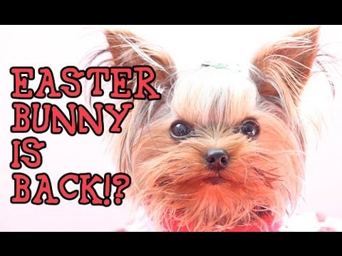 Easter Bunny is Back!?  Funny Talking Dog Video