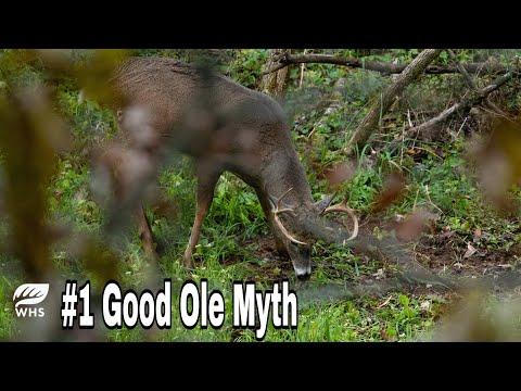 #1 Deer Hunting Myth Destroyed