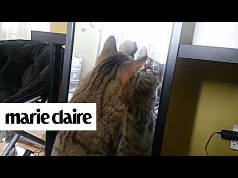 12 Hilarious Cat Fails | Marie Claire