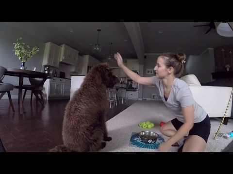Dog Training: Feeding Time