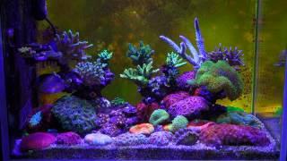 G4 App Control Led Aquarium Light