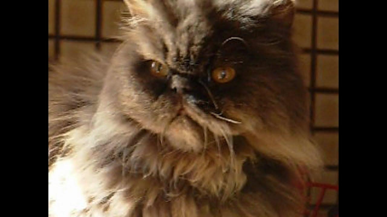 Crazy Cat Video