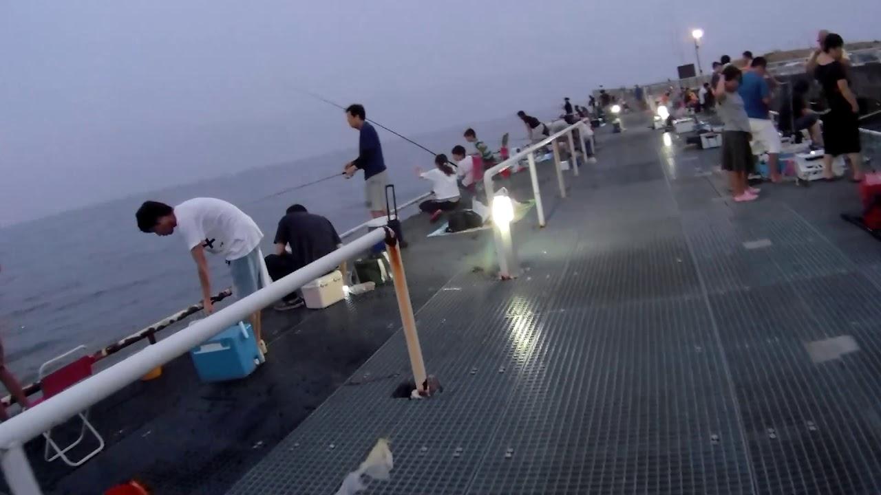 釣り 公園 海 豊浜