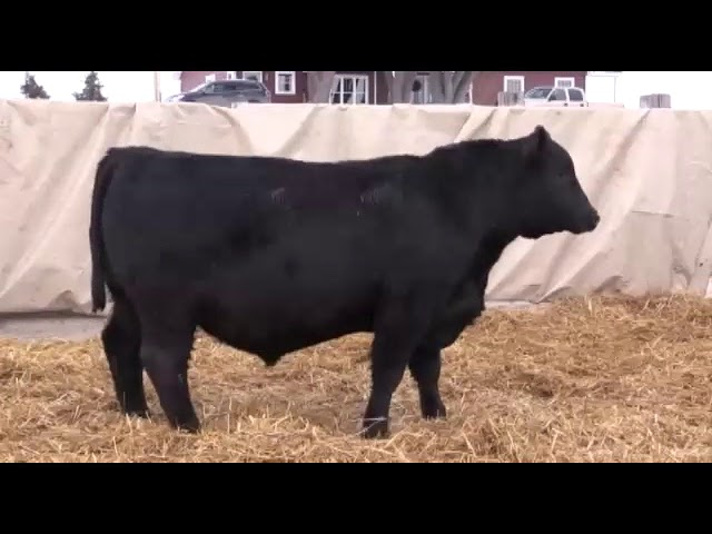 Marcy Cattle Company Lot 182