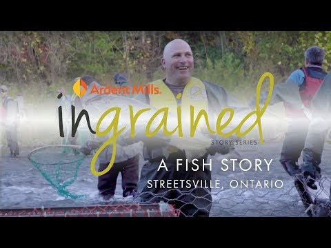 Ingrained: A Fish Story, Streetsville, Ontario