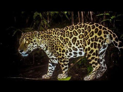 o-animal-mais-perigoso-do-brasil