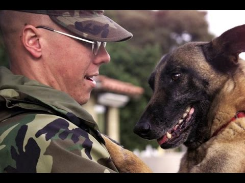 Dogs Welcoming Soldiers Home Compilation 2015