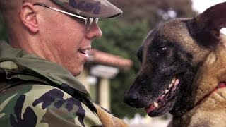 Dogs Welcoming Soldiers Home Compilation (2015)