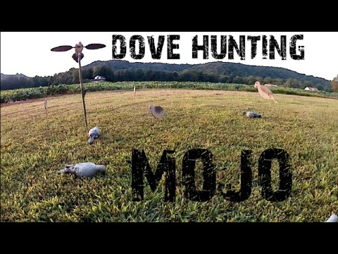 Dove Hunting! Decoys And Tips!!