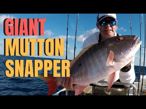Wreck Fishing For GIANT MUTTON SNAPPER