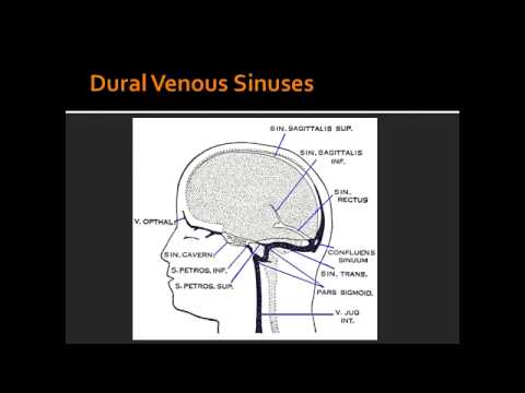 Dural Venous Sinuses - Anatomy - YouTube