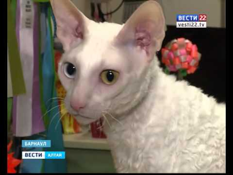 Барнаульские любители кошек рассказали, зачем люди заводят этих животных