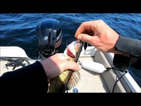 Walleye Fishing Oneida Lake