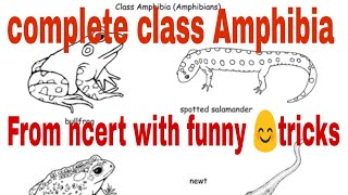 Phylum chordata class amphibia ! class Amphibia tricks! animal kingdom tricks!biology tricks! tricks