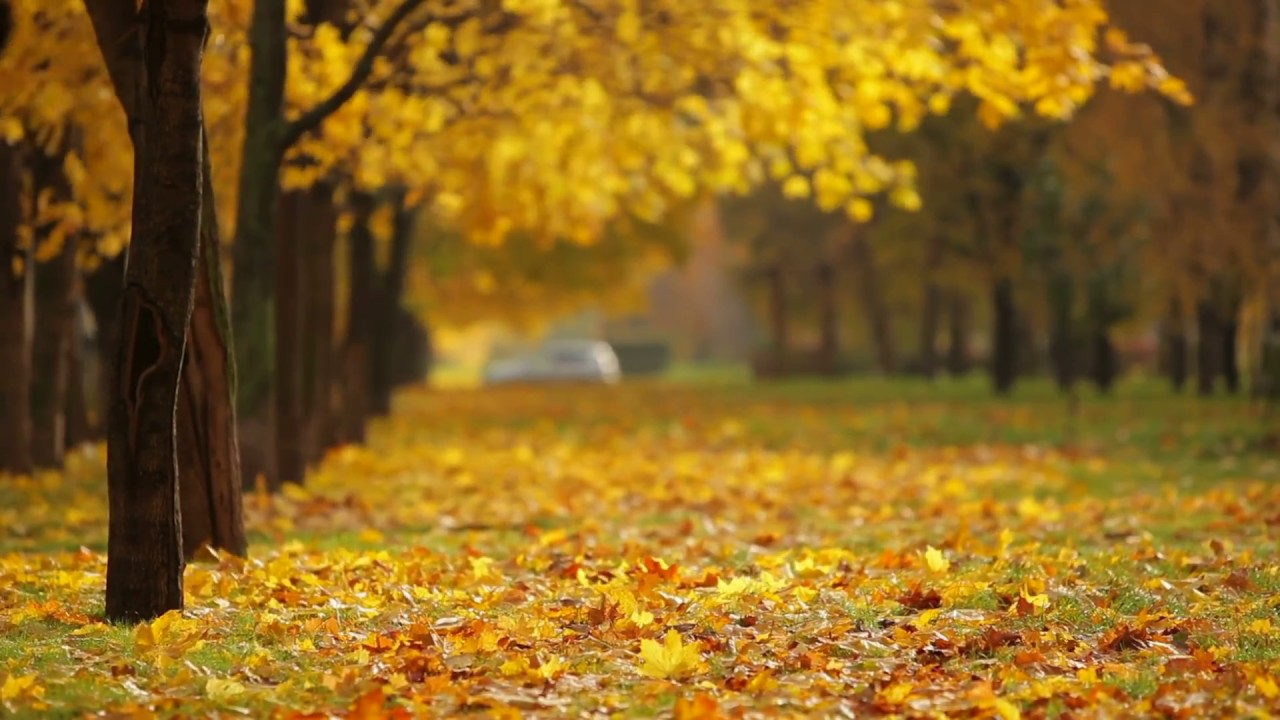 Fall Wallpaper For Android Beautiful Background Video 1080p Hd Youtube