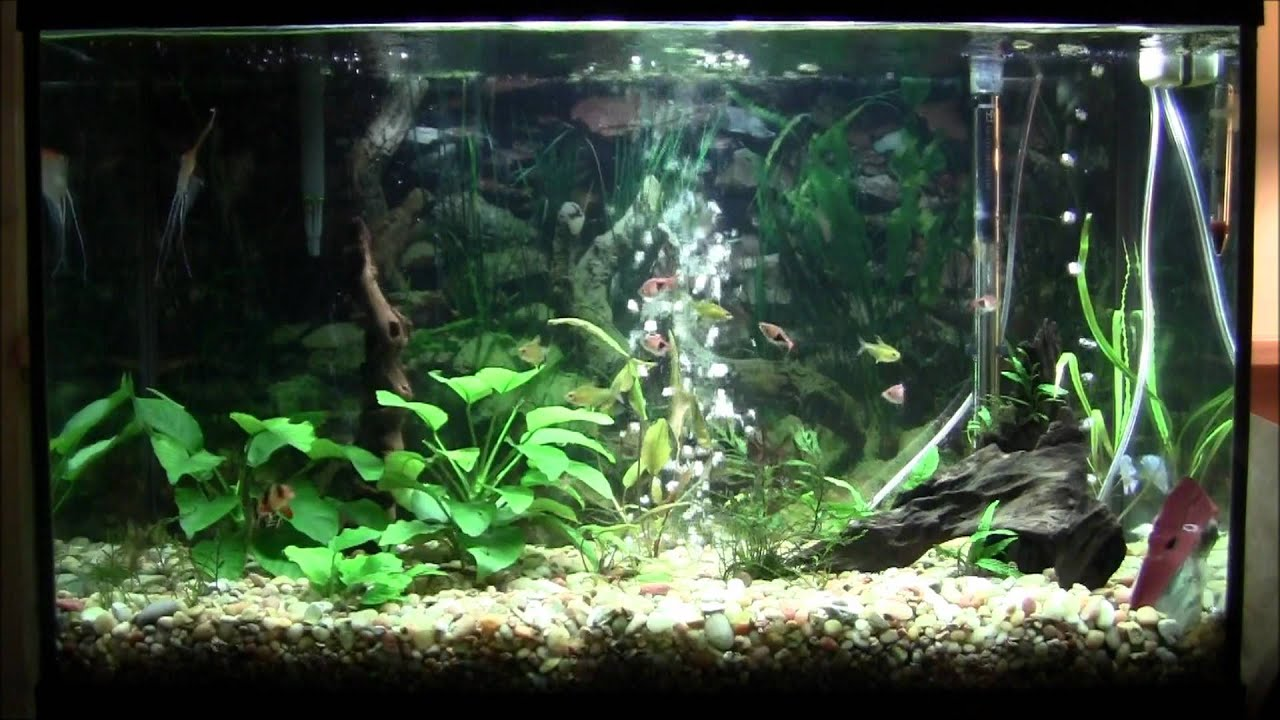 29 gallon planted aquarium fish youtube for 29 gallon fish tank