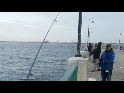 Non Stop Herring Action Canarsie Pier Fishing NEW YORK  #canarsiepier#herringfishing#herring