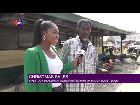 Christmas sales: Livestock dealers at Avenor expectant of major boost   Citi Newsroom