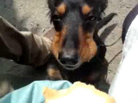 アイスクリーム犬2010