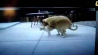 Repeat youtube video A dog and cat have some good sex.