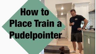 Step 3  Place Training  Pudelpointer  NAVHDA Journey