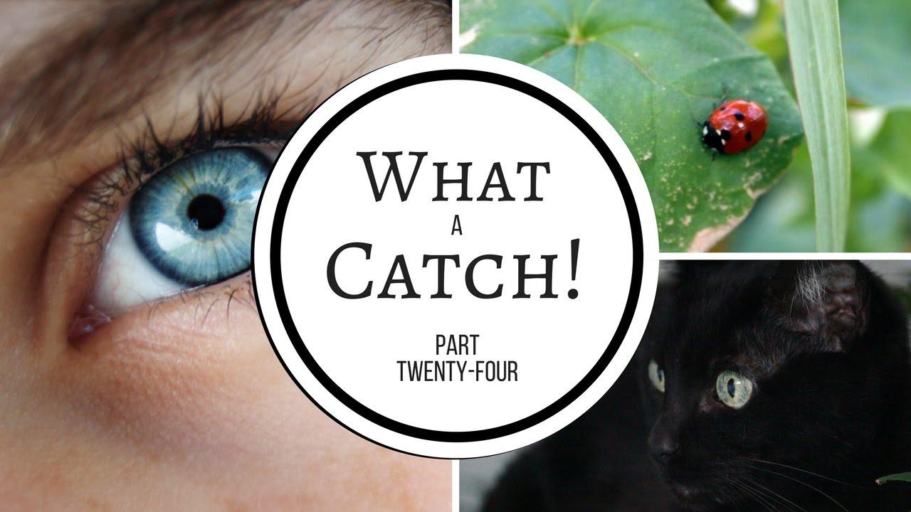 What a Catch! - Part 24 (A Miraculous Ladybug Fanfiction)