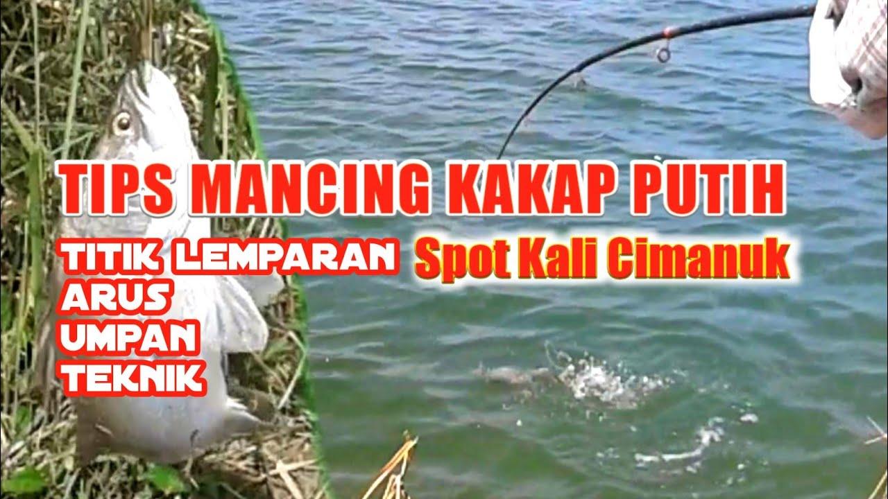 Tips mancing kakap putih di sungai, best moment