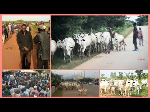 BREAKING: WATCH AS BRAVE FARMERS/HUNTERS CHASE ƙ!-11€ɍ HERDSMEN OUT OF THEIR COMMUNITY.