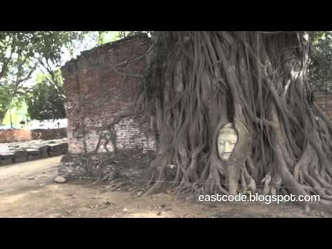 The Buddha Head in Tree Roots  Wat Mahathat  Ayutthaya Thailand