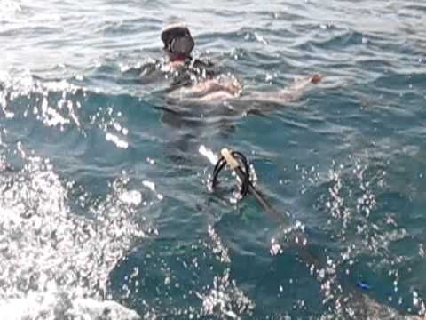 Cá mú 36kg tại Nha Trang 1