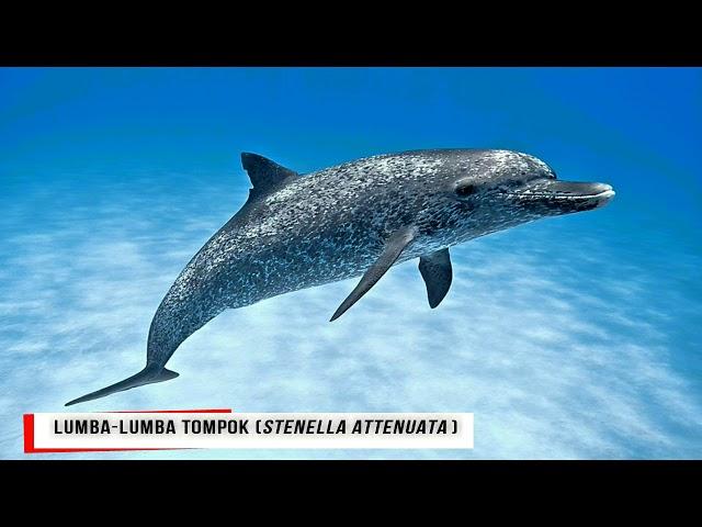 Ikan Lumba Lumba Spesies Marin Terancam