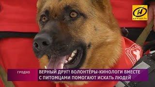Собаки-волонтёры поискового отряда Красного Креста в Гродно