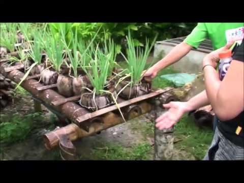 Maribojoc Organic Demo Farm   Nov 2015   Bohol Pt1