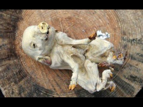 Чернобыль. Зона Отчуждения. Аномальные Явления. 08.12.2016