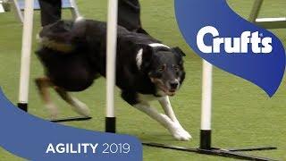Agility  International Invitation  Large (Agility)  Finals | Crufts 2019