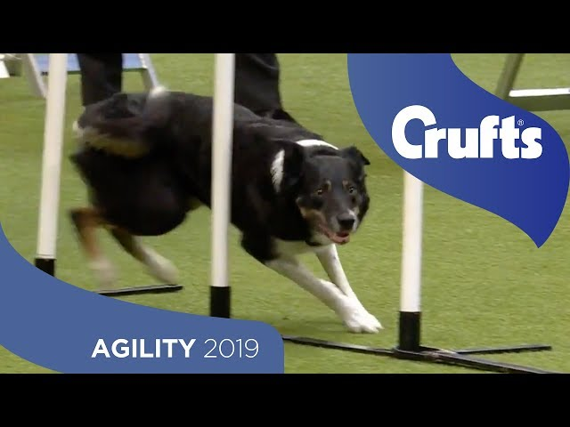 Agility - International Invitation - Large (Agility) - Finals | ​Crufts 2019
