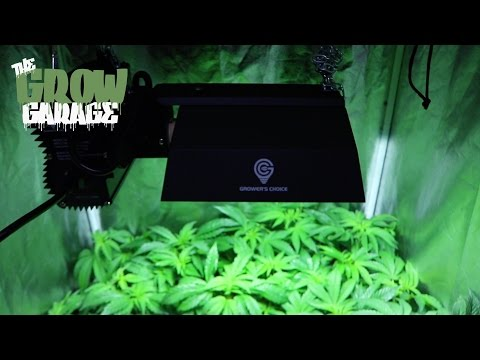 Oatmeal Raisin & Tahoe OG Grower's Choice 315 LEC Living Organic Soil Cannabis Grow