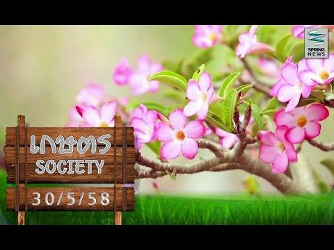 """เกษตร Society 30/5/58 : การดูแล """"ชวนชม"""" ให้ออกมาสวยงาม"""